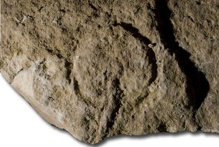Древнейшая гравировка вагины
