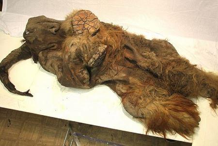 Мамонтенок Юка возрастом 39 тысяч лет