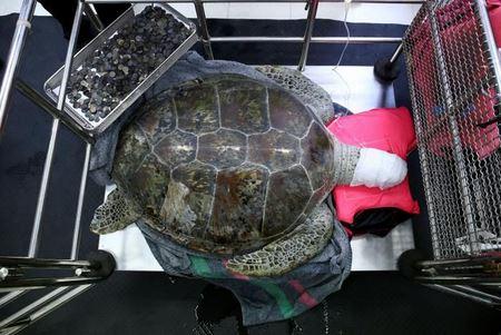 Из желудка живой черепахи достали клад монет!