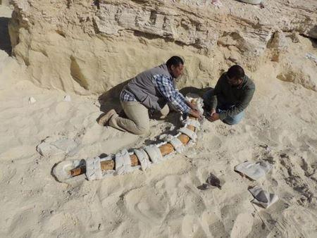 Гигантские доисторические слоны были обнаружены в Саудовской Аравии