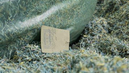 Миллионы гривен найдены в лесу под Днепром