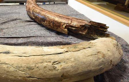 На Алтае археологи обнаружили диадему из бивня мамонта